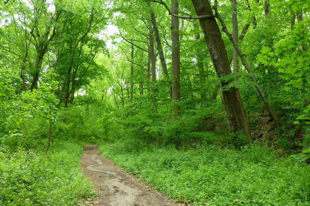 forest_path_wild