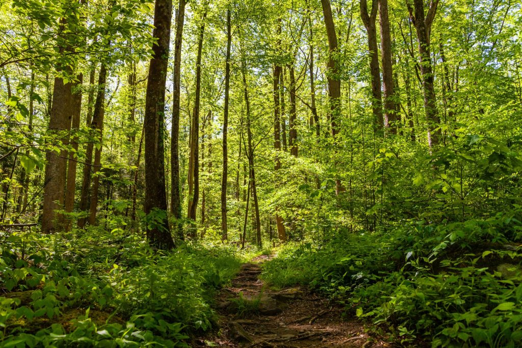 forst_path_yellow_green