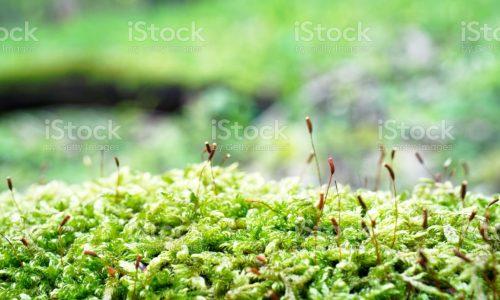 Moss on a fallen tree.